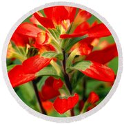 Indian Paintbrush I I Round Beach Towel