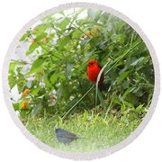 Indigo Bunting And Scarlet Tanager 2 Round Beach Towel
