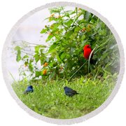 Indigo Bunting And Scarlet Tanager Round Beach Towel