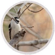 Inquisitive Woodpecker Round Beach Towel
