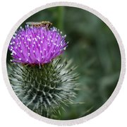 Insect On A Thistle Round Beach Towel