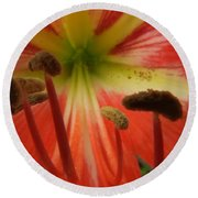 Inside Amaryllis Round Beach Towel