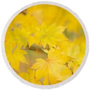 Intensely Yellow Round Beach Towel by Anne Gilbert