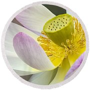 Intimate Sacred Lotus Bloom Round Beach Towel
