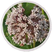 Into The Heart Of A Milkweed Flower Round Beach Towel