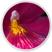 Into The Orchid Round Beach Towel