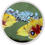 Io Moth Automeris Io Adult Males Round Beach Towel