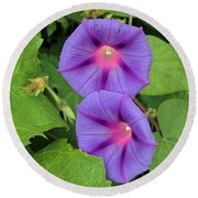 Ipomea Acuminata Morning Glory Round Beach Towel