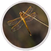 Iridescent Dragonfly Wings Round Beach Towel