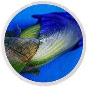 Iris On Blue Round Beach Towel