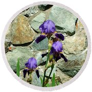Iris Portrait Round Beach Towel