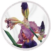 Watercolor Of A Tall Bearded Iris In A Color Rhapsody Round Beach Towel