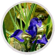 Iris With Frog Round Beach Towel