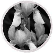 Irises In Black And White Round Beach Towel
