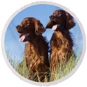 Irish Red Setter Dog Round Beach Towel