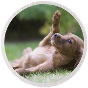 Irish Setter Puppy Round Beach Towel