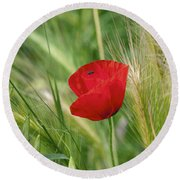 Italian Poppy Round Beach Towel