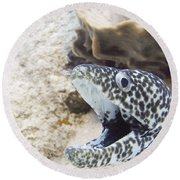 It's A Moray Round Beach Towel