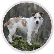 Jack Russell Dog In Autumn Setting Round Beach Towel