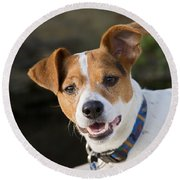 Jack Russell Terrier Round Beach Towel