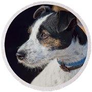 Jack Russell Terrier Round Beach Towel