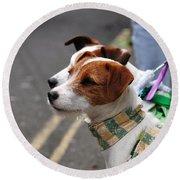 Jack Russell Terriers Round Beach Towel