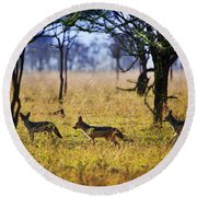Jackals On Savanna. Safari In Serengeti. Tanzania. Africa Round Beach Towel