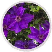 Jackmanii Purple Clematis Vine Round Beach Towel