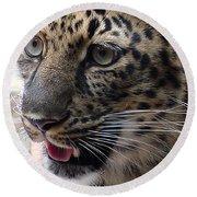 Jaguar-09498 Round Beach Towel