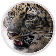 Jaguar-09499 Round Beach Towel
