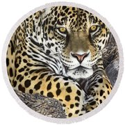 Jaguar Portrait Wildlife Rescue Round Beach Towel by Dave Welling