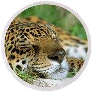 Jaguar Resting Round Beach Towel