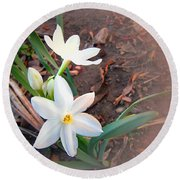 January 2014 Paper-whites In Bloom Round Beach Towel
