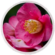 Japanese Camellia-the Official State Flower Of  Alabama Round Beach Towel
