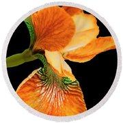 Japanese Iris Orange Black Round Beach Towel