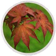 Japanese Maple Autumn Colors Round Beach Towel