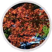 Japanese Maple Canopy Round Beach Towel
