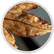 Japanese Maple Leaf Brown - 2 Round Beach Towel