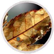 Japanese Maple Leaf Brown - 4 Round Beach Towel