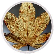 Japanese Maple Leaf Brown - 3 Round Beach Towel