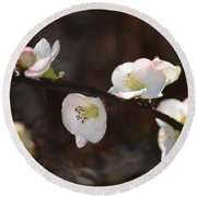 Japanese Quince 2 Round Beach Towel