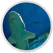 Jaws Round Beach Towel