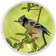 Jay In Nature Round Beach Towel