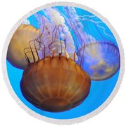 Jellyfish Trio Round Beach Towel