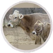 Jersey Cow And Calf Round Beach Towel