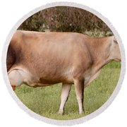 Jersey Cow In Pasture Round Beach Towel
