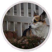 Johnny By The Fence Round Beach Towel
