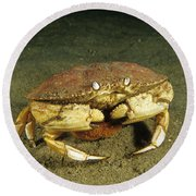 Jonah Crab Round Beach Towel