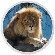 Joshua The Lion On His Rock Round Beach Towel