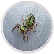 Jumping Spider - Green Salticidae Round Beach Towel